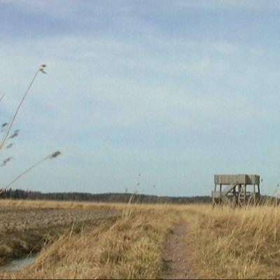 Saltfjärdens fågeltorn.