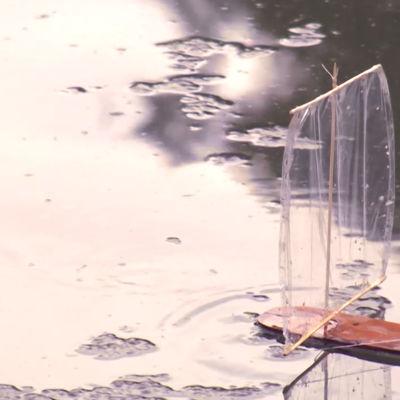 Kaarnavene vedessä.