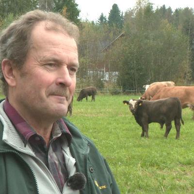 Man på betesäng med kor i bakgrunden.