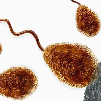illutsrerad bild av spermier