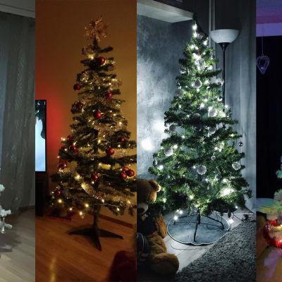 koristeltuja joulukuusia