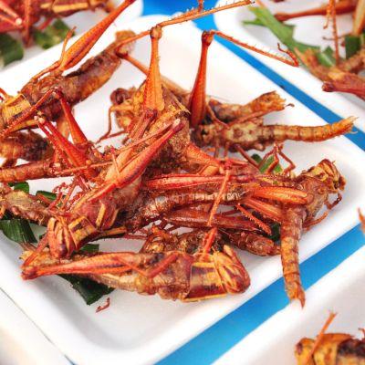 Heinäsirkka-annoksia lautsilla.