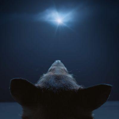 Koira katsoo tähteä taivaalla