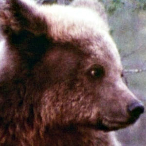 Karhu Karhun maa -dokumentissa 1982.