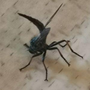 En svartfärgad insekt.