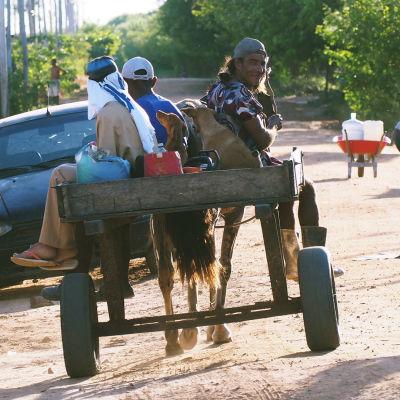 En åsna med vagn i Brasilien