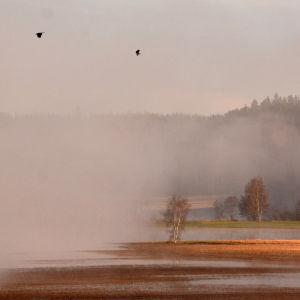 Lohjan Hyvelänjärven peltoalue