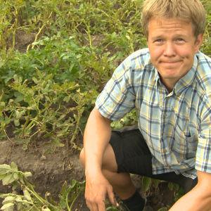 En blond man står på huk i potatisfältet iklädd shorts och blågul-rutig skjorta.