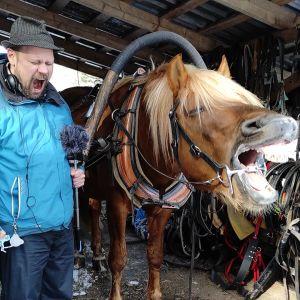 Olli Haapakangas hirnumassa suomenhevosen kanssa.
