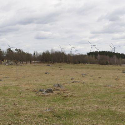 Åker, skog och vindkraftverk i bakgrunden.