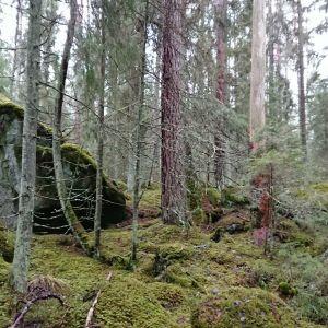Utterinvuoren metsää