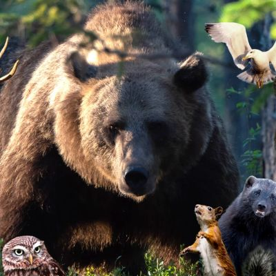 Kuvamanipulaatio, jossa eläimiä metsässä