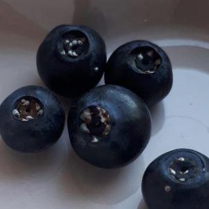 Vad kan dessa vita prickar vara på blåbären? undrar Siv.