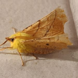 En orange- och gulfärgad fjäril på ljust kakel.
