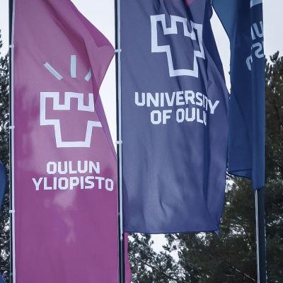 Oulun Yliopiston lippuja