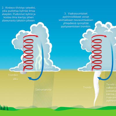 kuva trombin syntymisen vaiheista