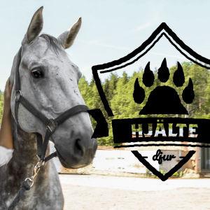 En ung kvinna står vid ett stall och tittar upp mot sin stora gråa häst. Hon håller handen på hästens hals.