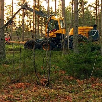 En skogsmaskin avverkar träd i Ekenäs.