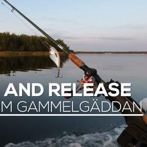 """Ett fiskespö hänger ut från en båt, vattnet ligger spegelklart och i bakgrunden syns en ö med skog. På bilden finns texten """"Catch and release - slaget om gammelgäddan"""""""