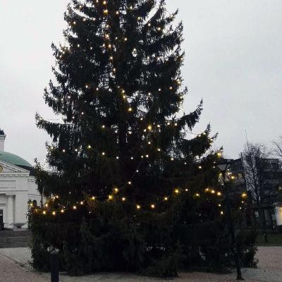 Hämeenlinnan torin joulukuusi, taustalla kirkko