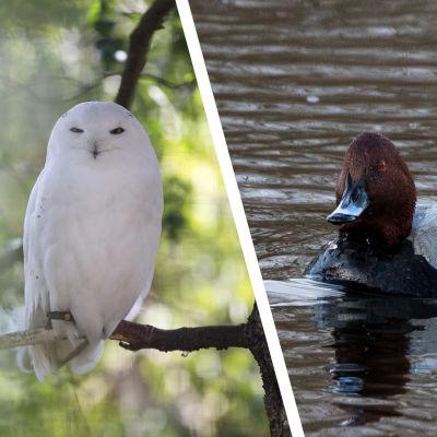 Utrotningshotade djurarter i Finland