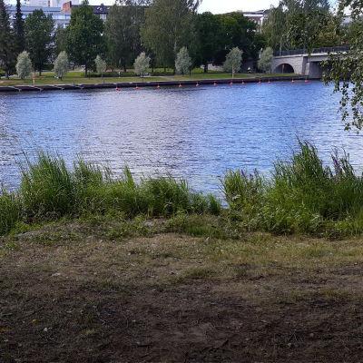 Järven ranta.
