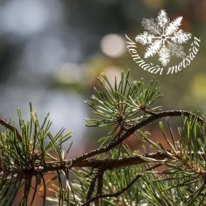 Männynoksa ja Mennän metsään -logo.