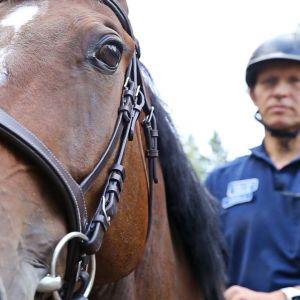Lähikuvassa Luigi-poliisiratsu, selässä ylikonstaapeli Timo Kossila.