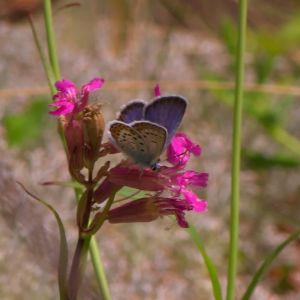 Det finns gott om fjärilar i nationalparken.