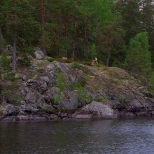 Vy från Päijänne nationalpark