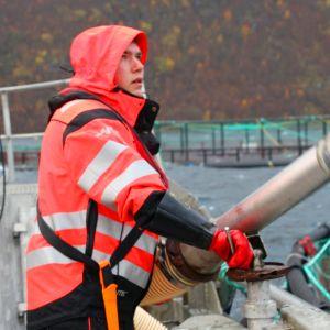 Smålax matas med foderkanon på fiskodling nära Skjervøy i Nordnorge