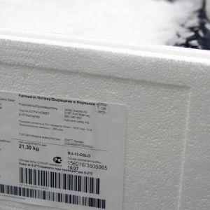 Lerøy Auroras laxslakteri i Skjervøy leverar lax bland annat till Ryssland