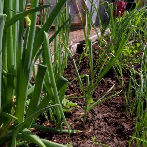 Allt världens odlas hos Bahnes i Pargas.