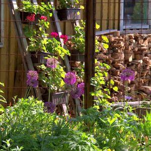 Trädgården hos Bahnes i Pargas.