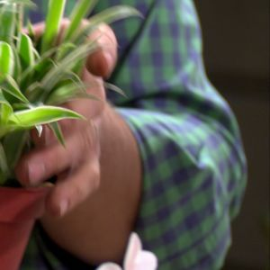 Gräsliljan bör man ha i sovrummet