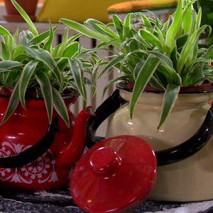 Växter kan även användas som inredningsobjekt