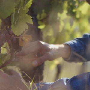 Vinodlare vill inte alltid berätta vad allt vinet innehåller.