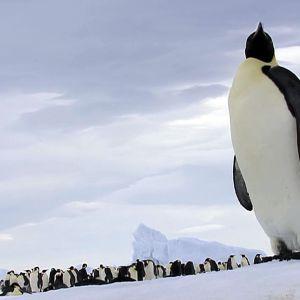 Etelämanner on elinympäristönä syrjäinen ja ankara.