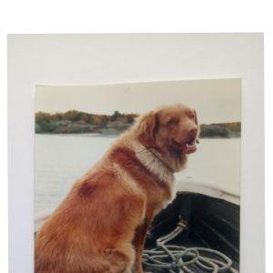 Satu Kiljusen rakas kumppani Vita-koira saaristossa veneessä.