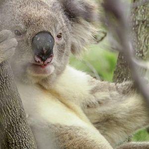 Uudessa dokumenttisarjassa Mears tutustuu kuuteen australialaiseen luontotyyppiin.