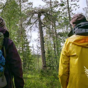 Kaksi ihmistä kävelee metsässä.