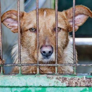 Docstop-sarjan aloittava dokumentti pureutuu koirajalostuksen pimeisiin puoliin.