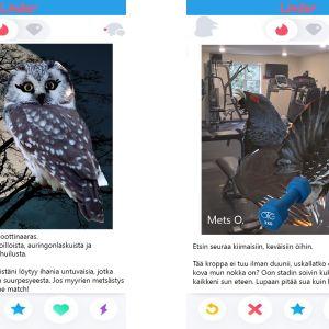 Lintujen treffiprofiileita