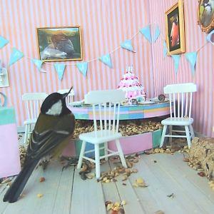 Pitkänokkainen talitiainen lastenkutsuiksi muokatulla lintulaudalla
