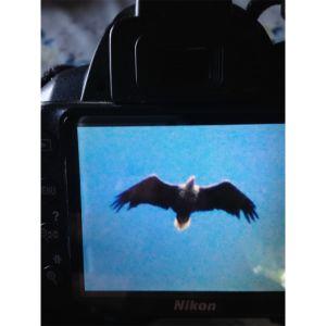 Ett foto av en kameras bildskärm med en bild på en rovfågel