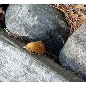 En orangefärgad insekt på en grå träbit