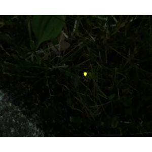 En lysmask som lyser skarpt grönt i en i övrigt mörk bild