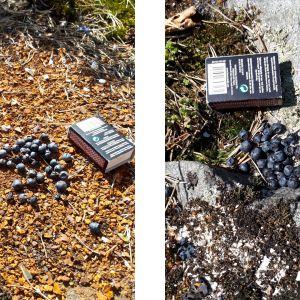 Två bilder på blåbär och tändsticksask