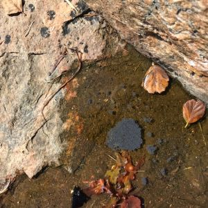 """Vatten vid en strand, och i vattnet flyter några löv och ett litet svart """"flak""""."""