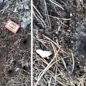 Två bilder på små gropar som insekt grävt i sanden.